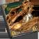 恐竜大図鑑vol.1full